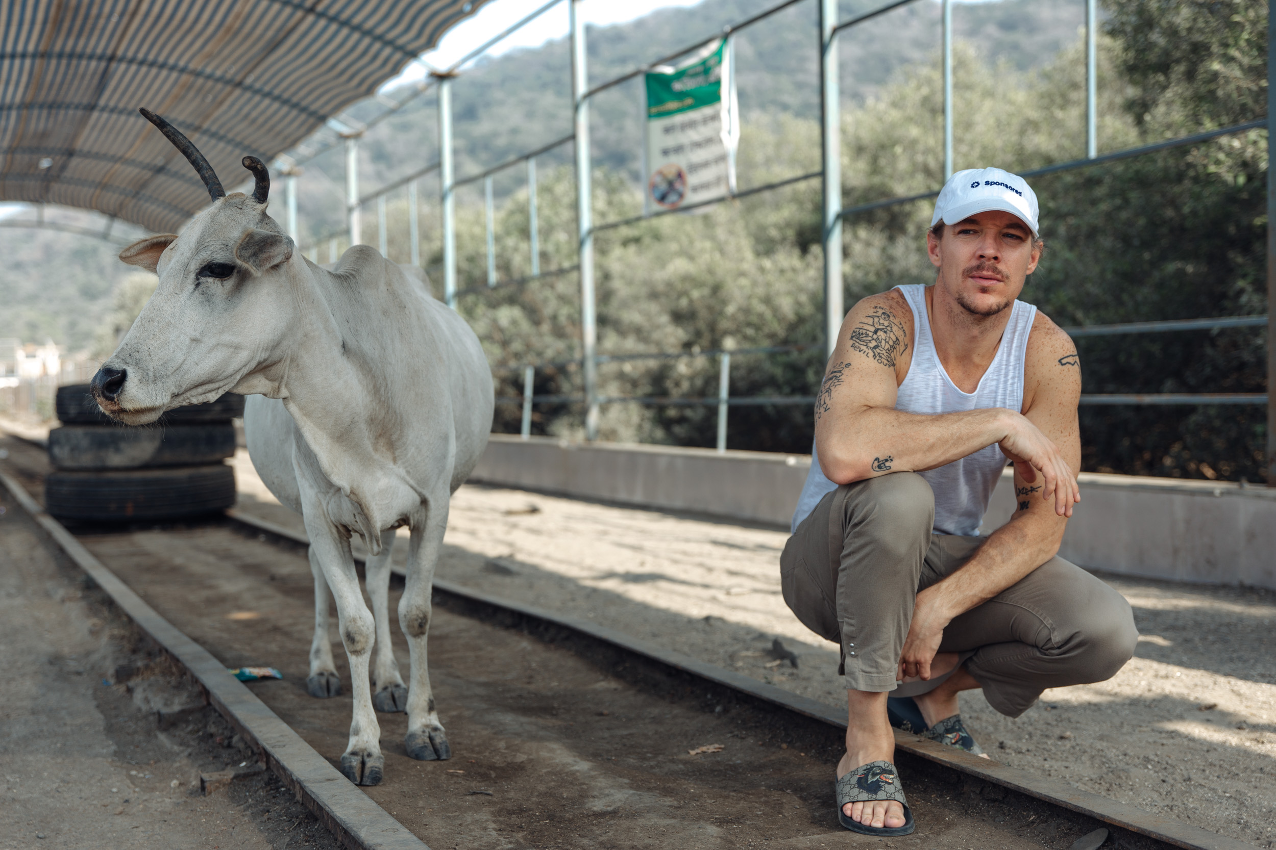 Diplo and cow
